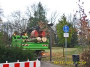 2013-11-29_Baumfallung-Herosepark-04