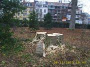 2013-11-29_Baumfallung-Herosepark-05